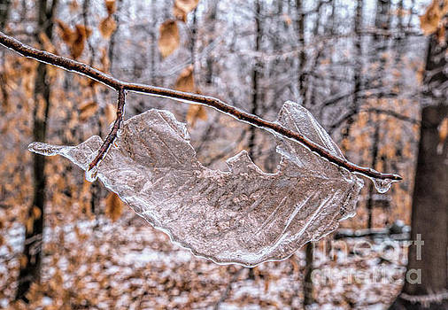 Frozen Remains by Todd Breitling