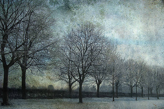 Frozen Tree Alley by Sonia Stewart