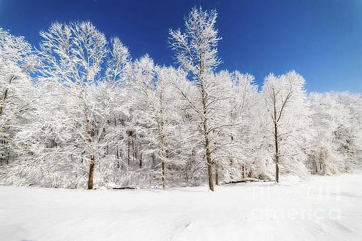 Dan Friend - Frozen trees