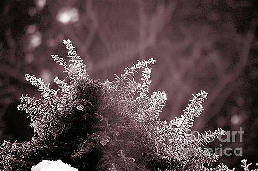 Susanne Van Hulst - Frozen - Winter in Switzerland
