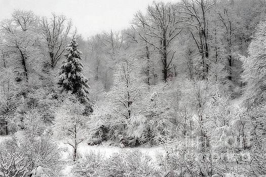 Dan Friend - Frozen woods