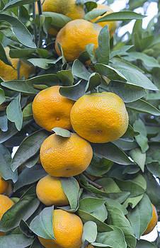 Fruit by Jessica Nguyen