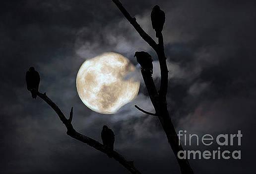 Full Moon Committee by Darren Fisher