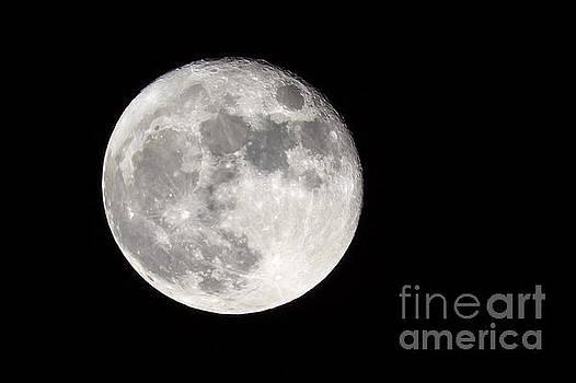 Beaver Moon by John Lee