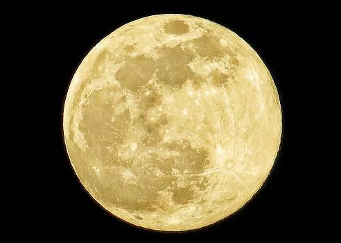 Full Moon by Nikki McInnes
