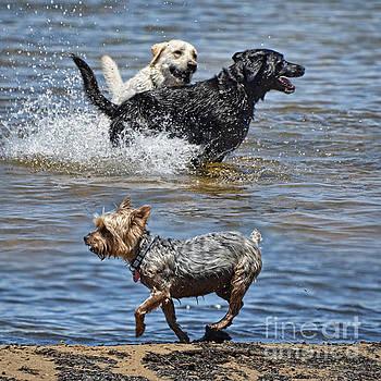 Fun at the Lake by Jim Fitzpatrick