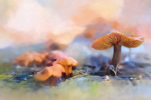 Funtime Fungi by Prairie Poetry