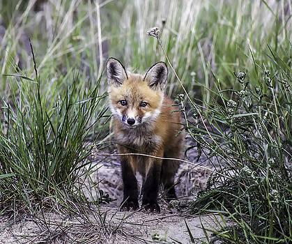 Furry Friend by Valerie Pond