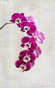 Fuschia Orchid Spray - 22.5 x 36 by Barbara McMahon
