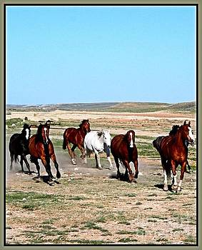 Galloping Horses by Carole Martinez
