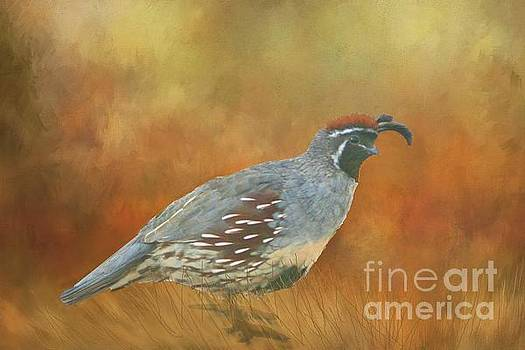 Gambel Quail in Death Valley  by Janette Boyd