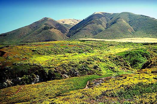 Garapata Hills AndValleys by Joyce Dickens