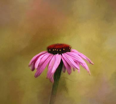 Kim Hojnacki - Garden Bliss