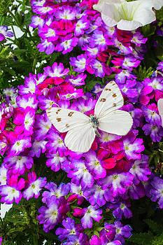 Garden Butterfly by Garry Gay