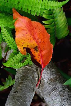 Garden Charmer by Donna Blackhall