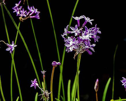 Garden Flower by Jim Ziemer