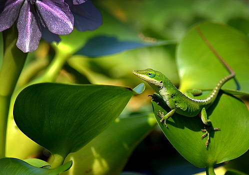 Garden Gecko by Lori Seaman