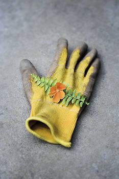 Garden Glove and Pansy Blossom2 by Di Kerpan