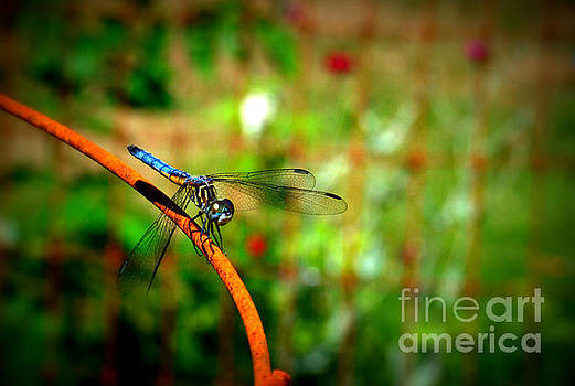 Blue Dragonfly by Eunice Miller