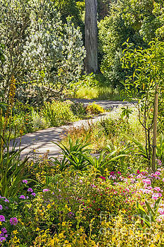 Garden Path by Kate Brown