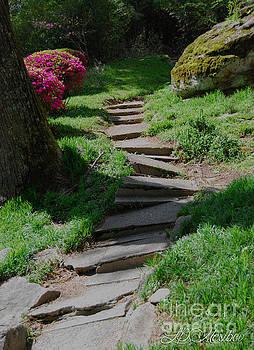Garden Path by Linda Mesibov
