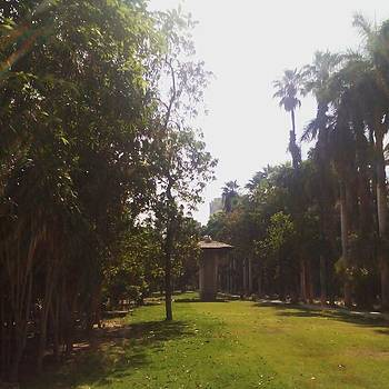 #garden #tree #egypt #mohamedalipalace by Eman Allam