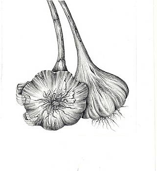 Garlic II by Elizabeth H Tudor