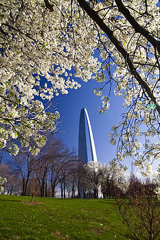 Gateway Arch with cherry tree in bloom. by Sven Brogren