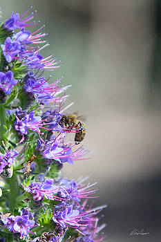 Diana Haronis - Gathering Nectar