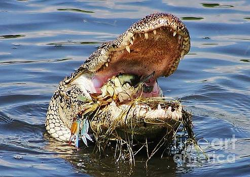 Paulette Thomas - Gator Catches A Crab