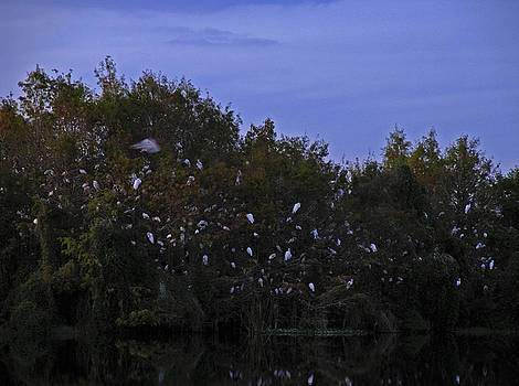 Juergen Roth - Gator Lake