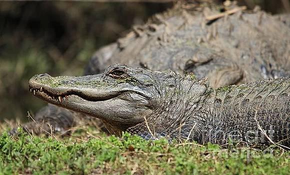 Paulette Thomas - Gators