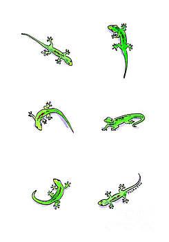 Gecko Play by Diane Thornton