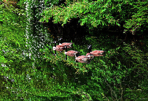 Geese And Reflections 002 by George Bostian