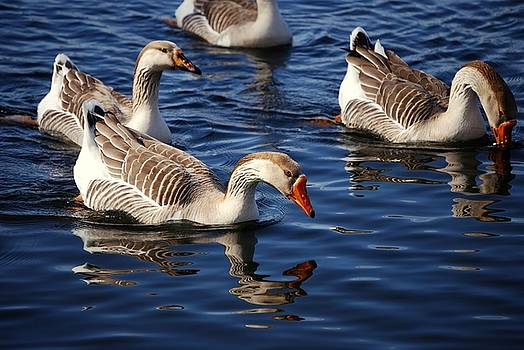 Geese by Charles Bacon Jr