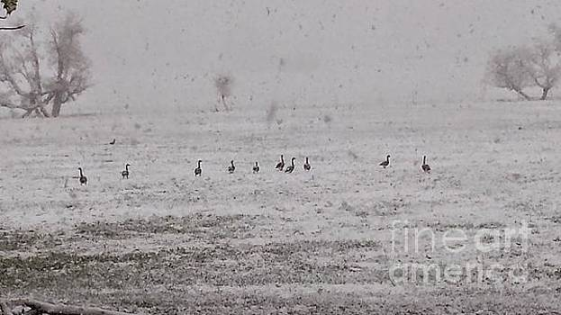 Geese during the snow storm by Carole Martinez