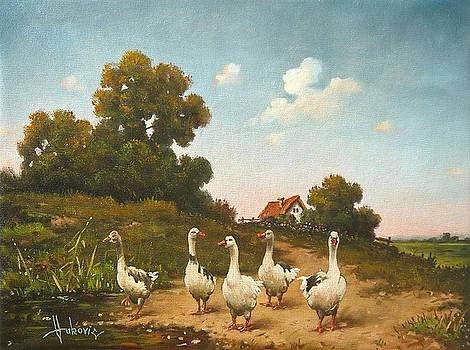 Geese by Dusan Vukovic