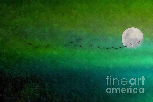 Geese in Flight  by Andrea Kollo