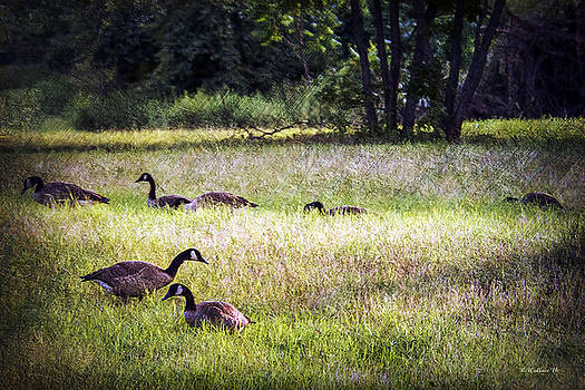 Geese In The Grass by Brian Wallace