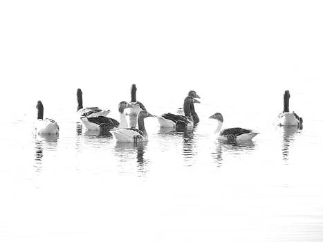 Geese by Lynn Bolt