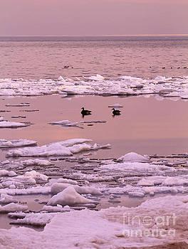 Geese on Lake Huron at sunset by Kathy DesJardins