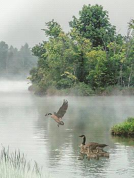 Geese on Misty Lake by Matthew Schwartz
