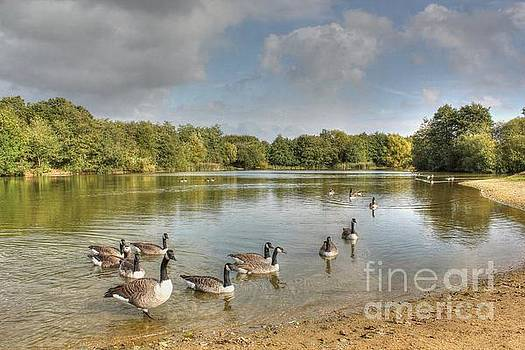 Geese on the Lake HDR by Vicki Spindler