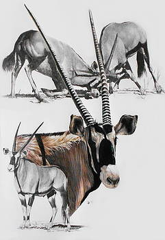 Gemsbok by Barbara Keith