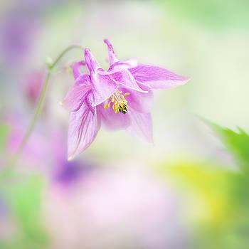Gentle Elegance by Sarah-fiona  Helme