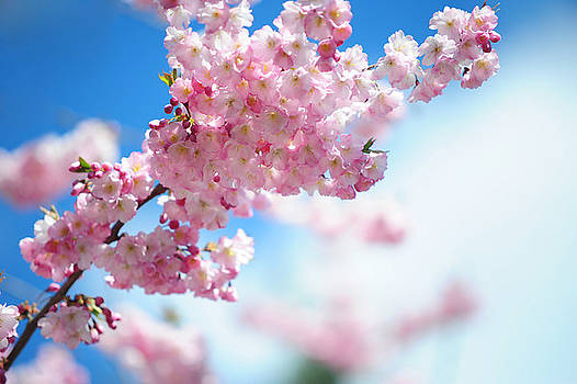 Jenny Rainbow - Gentle Spring Arrival