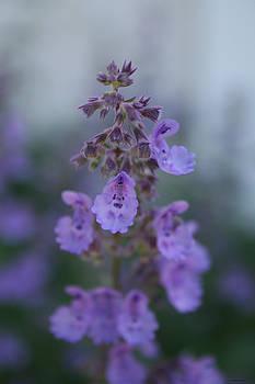 Linda Sannuti - Gentle Spring