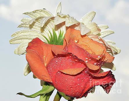 Gerber And Rose by Elvira Ladocki