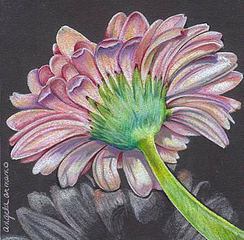Gerber Daisy by Angela Armano