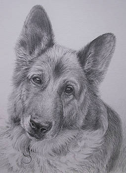 German Shepherd by Keran Sunaski Gilmore
